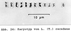 haploid karyotype of Temnothorax recedens