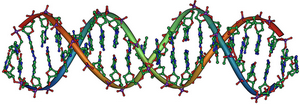 DNA Overview2 resize.png
