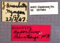 Dolichoderus armstrongi holotype ANIC32-007964 labels-Antwiki.jpg