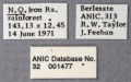 Ponera incerta ANIC32-001477 labels-Antwiki.jpg