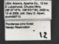 Leptothorax-crassipilis-MCZ001Label.jpg