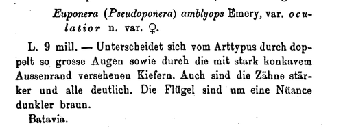 Forel 1909 p. 221.png